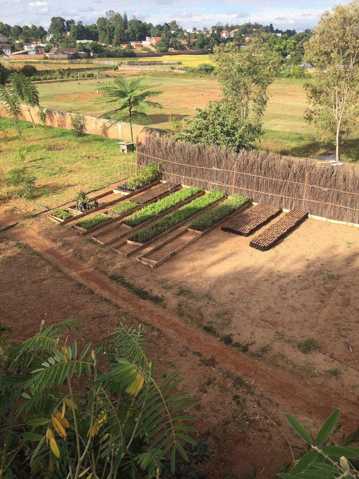 Les collaborateurs d'Epsilon plantent des arbres chez eux