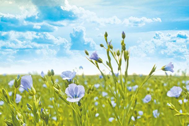 Flax fields CEPOVETT Group