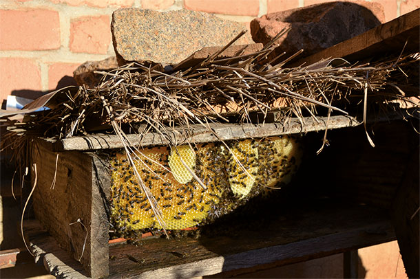 Beekeeping EPSILON Madagascar